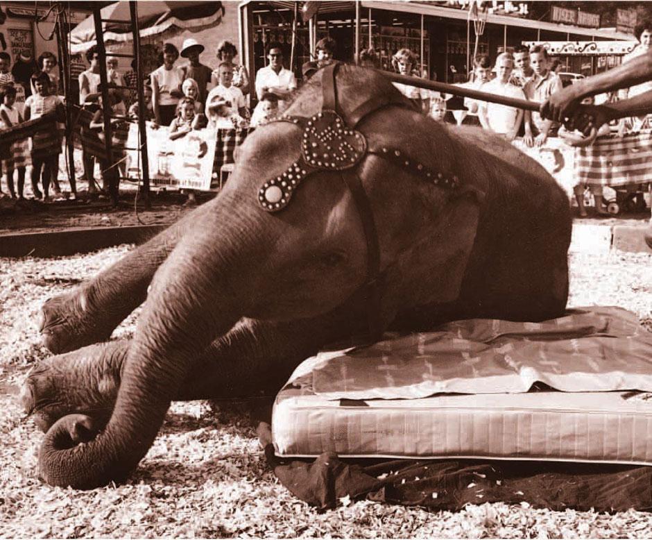 Elephant Restonic Mattress history heritage month