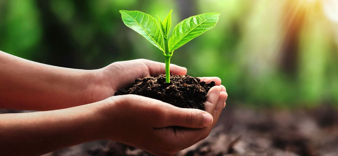 Introducing our Plant-a-Tree Programme